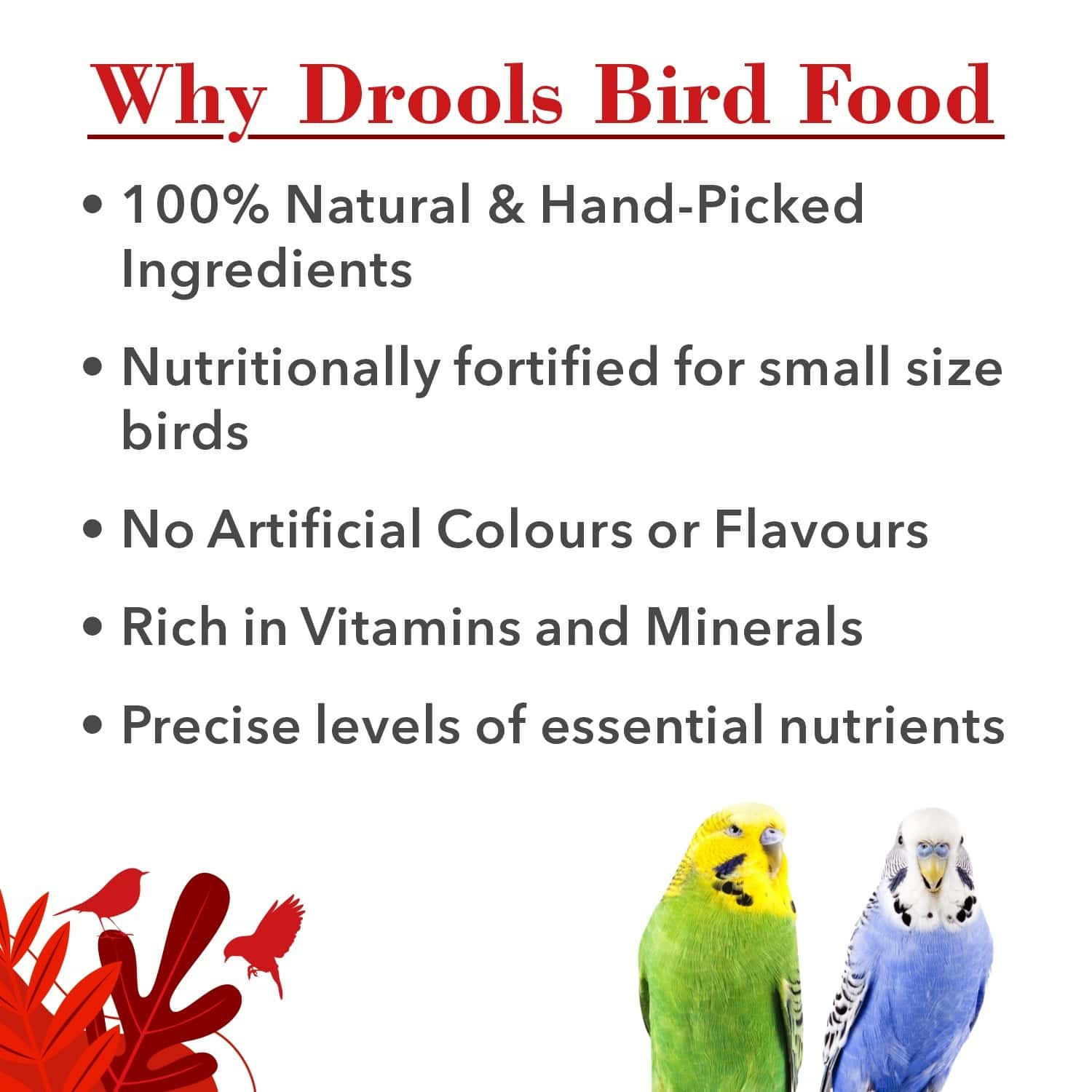 Drools Bird Food For Budgies With Mixed Seeds 1kg