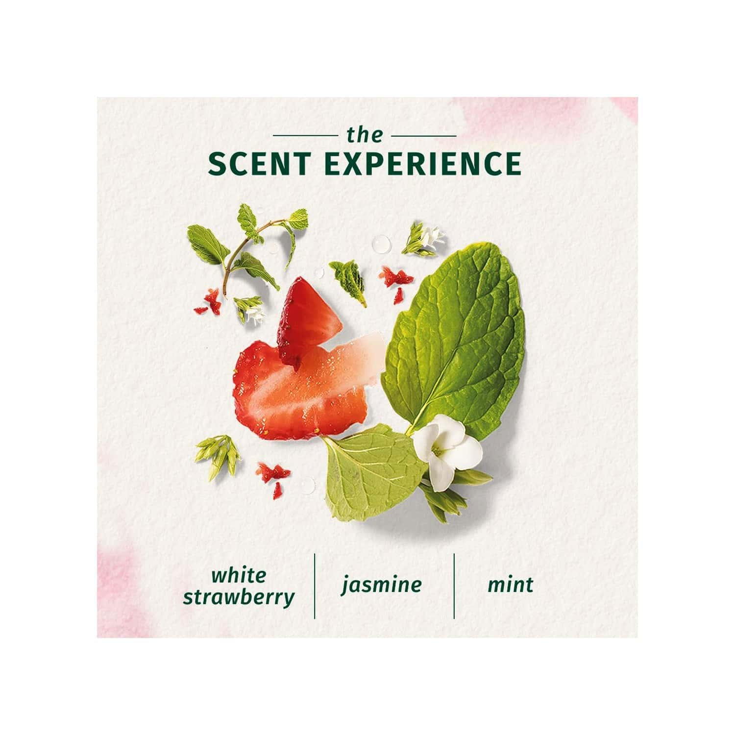 Herbal Essences Bio Renew Clean White Strawberry And Sweer Mint Conditioner - 400ml