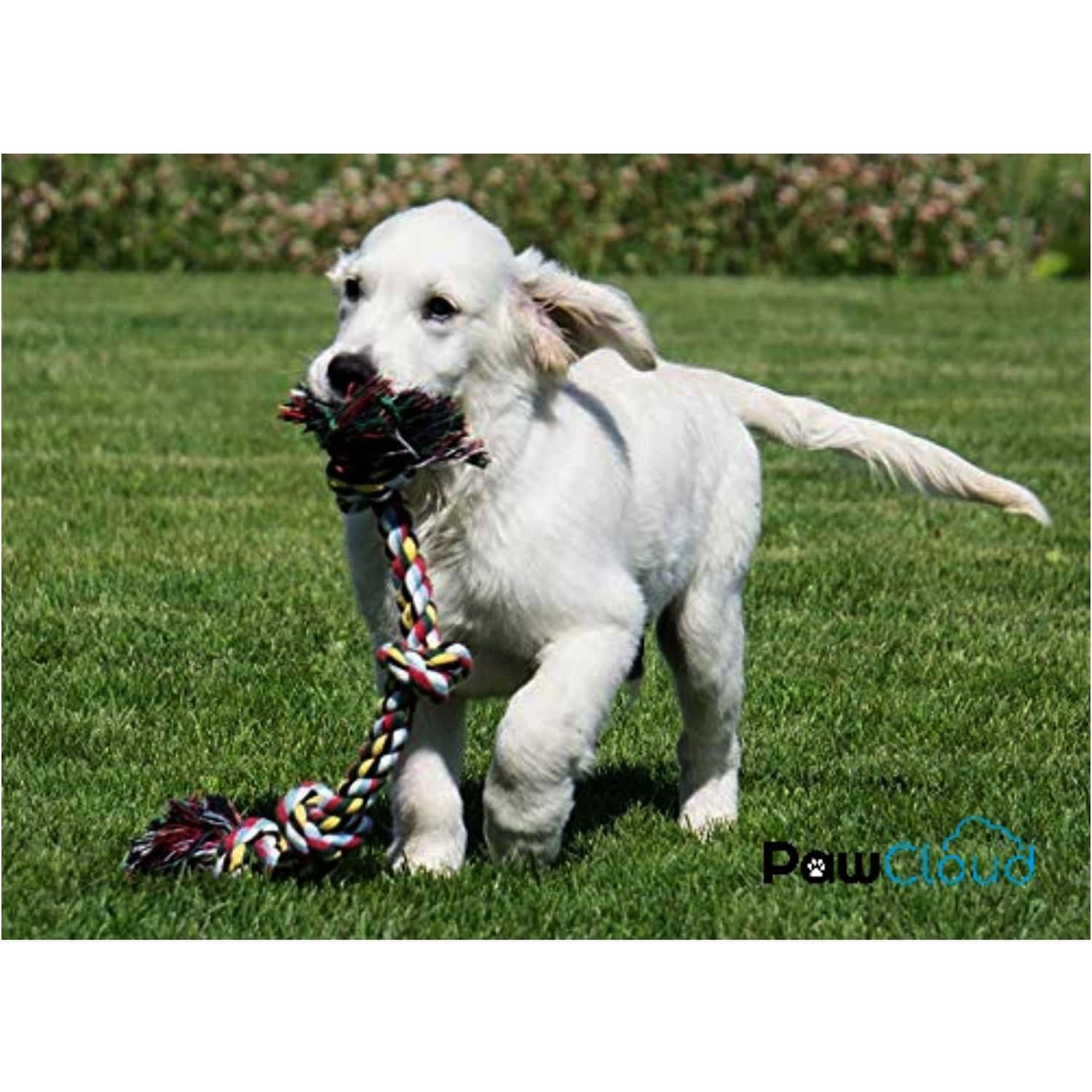 Pawcloud 3 Knots Cotton Rope Dog Toy, Large - 16 Inch, Interactive Teething & Chewing Multicolor Toy